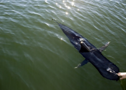 USA Tests Spy Drone Tuna